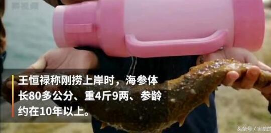 渔民捕获4.9斤重海参长达80厘米,比暖水瓶还长